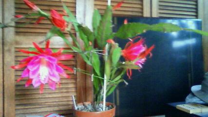 素敵な花です
